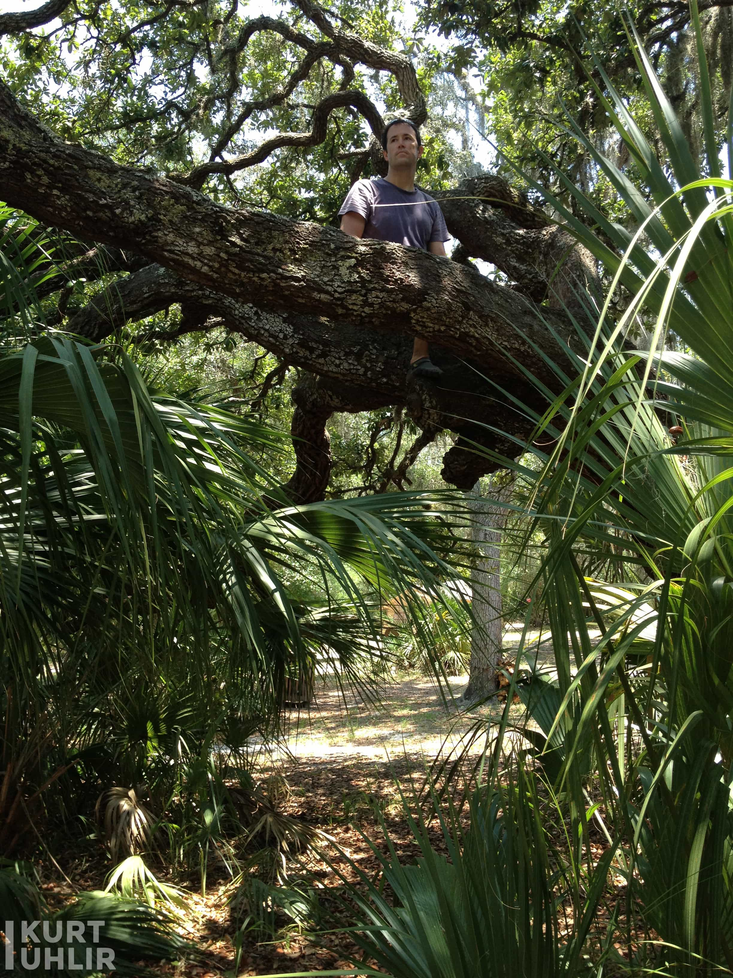 Kurt Uhlir climbing tree on Manatee River in Florida - 2012